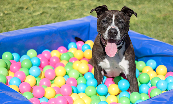 Dog in a kids ball pit